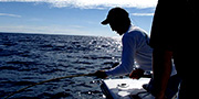 Deep Sea Fishing Orange Beach - News Articles